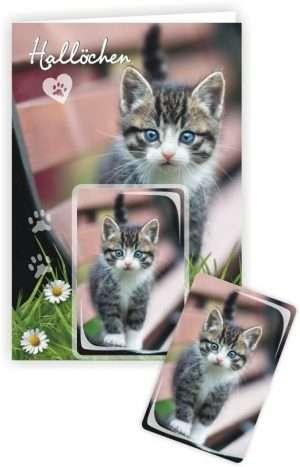Die Glückwunschkarte zum Geburtstag mit Magnet und Umschlag Katze auf Bank