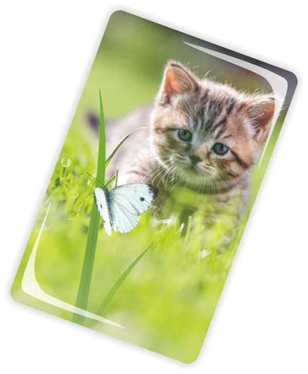 Die Glückwunschkarte zum Geburtstag mit Magnet und Umschlag Katze auf Wiese