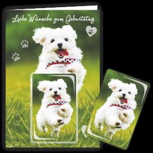 Geschenkkarte-Magnet-Glueckwunschkarte-Magnetkarte-Hund-Wuensche-AV-Andrea-Verlag-andrea-geschenke.de