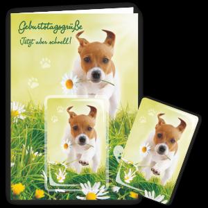 Geschenkkarte-Magnet-Glueckwunschkarte-Magnetkarte-Jetzt-aber-schnell-AV-Andrea-Verlag-andrea-geschenke.de