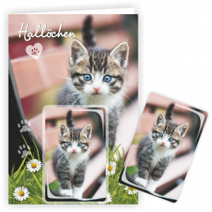 Geschenkkarte-Magnet-Glueckwunschkarte-Magnetkarte-Katze-Bank-AV-Andrea-Verlag-andrea-geschenke.de